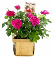 Berry Patch Roses in Wooden Box - 4-inch pot