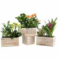 Blooms & Foliage Dish Garden - Assorted - 1 ct