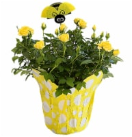 Bug & Bee Blooming Potted Plant