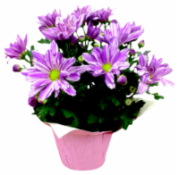 Special Blooming Plant Assorted