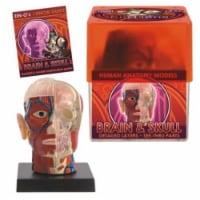 Tedco Toys 32370-BRA Bio Signs Brain And Skull Anatomy Model - 1