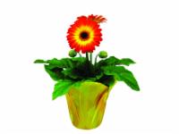 Rogh Gerbera Assorted Classic Flowering Plant
