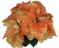 Red Oak Greenhouse Poinsettia - Autumn Beauty