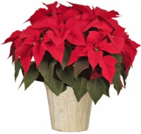 Red Oak Greenhouse Poinsettia - Red