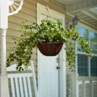 Faux English Ivy  Hanging Natural and Lifelike Artificial Arrangement and Imitation Greenery - 1 unit