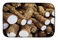 Carolines Treasures  GAK1026DDM Yucca by Gary Kwiatek Dish Drying Mat