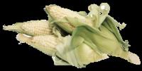 White Corn - 5 ct