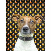 Candy Corn Halloween Jack Russell Terrier Flag Canvas House Size - House Size