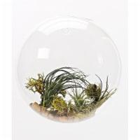Athenas Garden LO-HCH1107-2APS-1APM-L -PRSM-MIX 7 in. Half-Round Hanging Glass Terrarium Set - 1