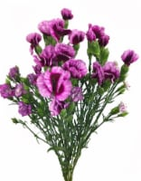 Riverdale Farms Solo Mio Raffines Flowers