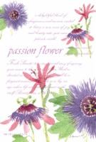 Fresh Scents Passion Flower Sachet Pack - 3 pk