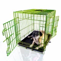 Backyard Expressions Green 24 Inch Folding 2 Door Metal Pet Crate