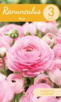 Pink Ranunculus Bulbs - 3 ct