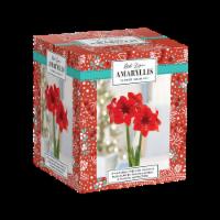 Red Lion Amaryllis Bulb Kit - 1 ct