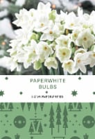 Paperwhites Bulbs 3 Count