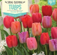 Garden State Bulb Tulip Berry Mixed Bulbs 20 Count