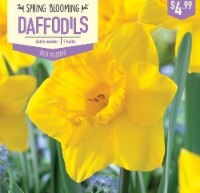 Garden State Bulb Daffodil Dutch Master Bulbs 7 Count