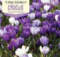 Garden State Bulb Crocus Blue Moon Mix Bulbs 12 Count - 12 ct