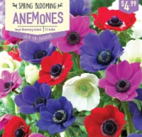 Garden State Bulb Anemone Large Flowering Mix Bulbs 12 Count