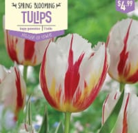 Garden State Bulb Tulip Happy Generation Bulbs 7 Count