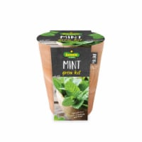 Bonnie Plants Mint Seeds Growing Kit