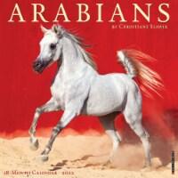 Arabian Horses 2022 Wall Calendar - 1
