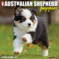 Just Australian Shepherd Puppies 2022 Wall Calendar (Dog Breed) - 1