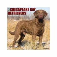 Just Chesapeake Bay Retrievers 2022 Wall Calendar (Dog Breed) - 1