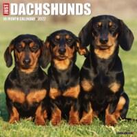Just Dachshunds 2022 Wall Calendar (Dog Breed) - 1
