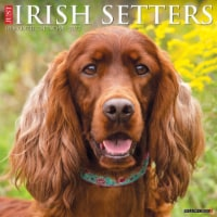 Just Irish Setters 2022 Wall Calendar (Dog Breeds) - 1