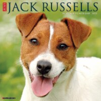 Just Jack Russells 2022 Wall Calendar (Dog Breeds) - 1