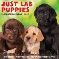Just Lab Puppies 2022 Wall Calendar (Labrador Retriever Dog Breed) - 1