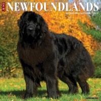Just Newfoundlands 2022 Wall Calendar (Dog Breed) - 1