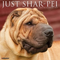 Just Shar-Peis 2022 Wall Calendar (Dog Breed) - 1