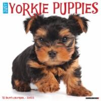 Just Yorkie Puppies 2022 Wall Calendar (Dog Breed) - 1