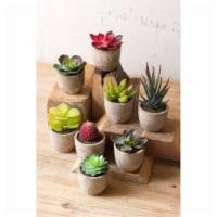 Set Of 8 Miniature Succulents 2.5  X 3.5 T - 1