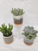 Mini Succulents in Southwest Ceramic Pot - 3 ct