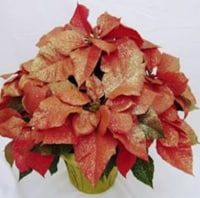 Bling-settia Poinsettia with Holiday Pot Cover (Approximate Delivery is 5-7 days)