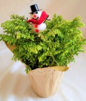 Frosty Fern with Snowman Pick & Holiday Pot Cover (Approximate Delivery is 3-5 days)