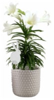 Easter Lily in Hobnail Ceramic Pot