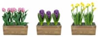 Potted Bulbs in Wood Crate - Assorted