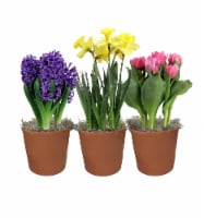 Bulbs in Clay Pot - Assorted