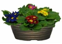 Primrose Plant in Bowl