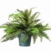 National Tree Company 20 Inch Artificial Plant Fern Bush with Green Growers Pot - 1 Piece