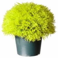 National Tree Company 15 Inch Golden Juniper Artificial Bush with Pot, Green - 1 Piece