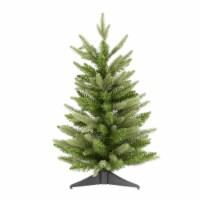 24  x 16  Fraser Fir Tree 90 Tips - 1