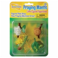 Insect Lore Mantis Life Cycle Stages