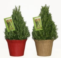Rosemary Assorted Potted Plant with Pot Cover and Cookbook