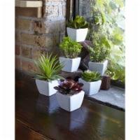 Potted Succulent (Set of 6) 7 H Ceramic/Plastic - 1
