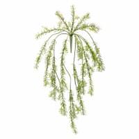 Asparagus Fern Vine (Set of 6) 33 L Plastic - 1